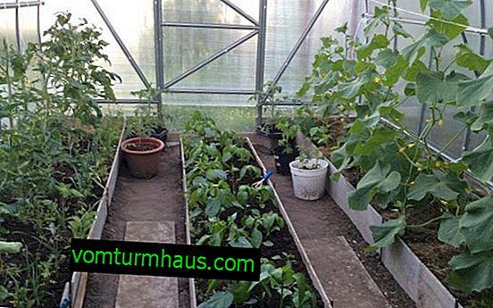 Samtidig placering av grödor i växthuset