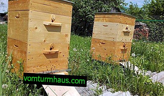Matlagning letki i bikupan för vintern
