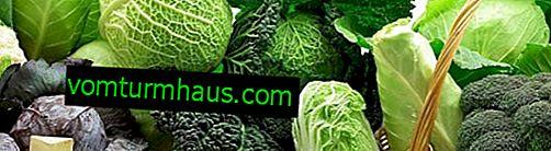 Jak zelí ovlivňuje hubnutí, dietní pravidla, denní menu