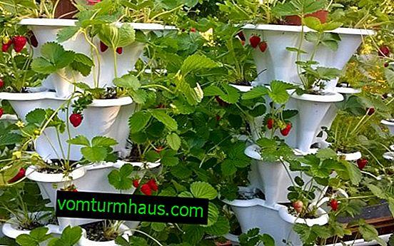 Camas verticales de fresa