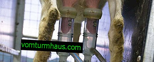 Goat milking machine: a review of the best models, making it yourself