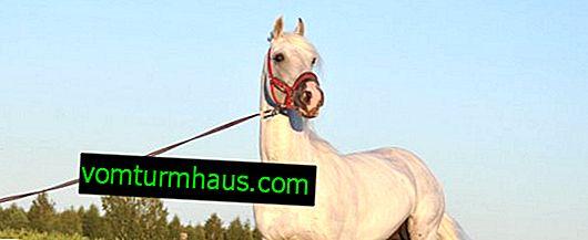 Oryolhästar: beskrivning, egenskaper och innehåll i rasen