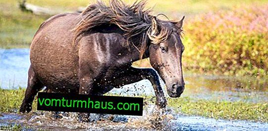 Kako se konji rađaju: opis, njega i održavanje trudnog konja i ždrebadi