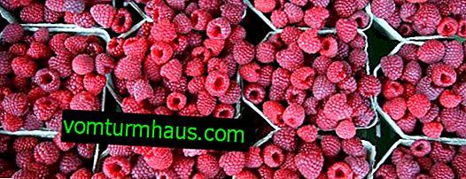 Hindbær Kirzhach: egenskaber, funktioner ved dyrkning