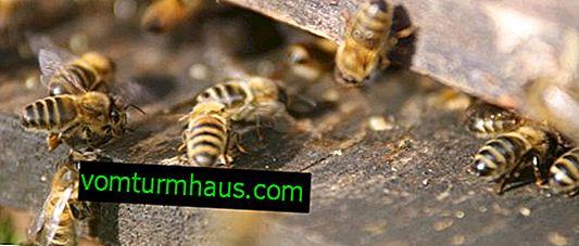 Caractéristiques des ruches de 16 cadres
