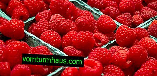 Frambuesas variedades Atlant: características, características de cultivo