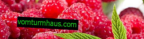 Raspberry Cascade Delight: características, características de la tecnología agrícola