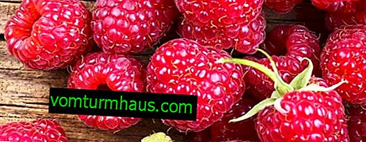 Repairing large-fruited raspberries Eurasia: productivity and ripening