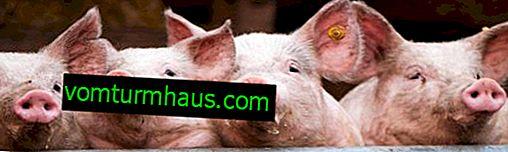 Stimolatore della crescita del maiale