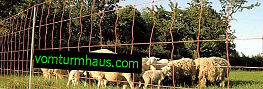 Den elektroniske hyrde til får: fordele og ulemper, processen med at vænne sig til får
