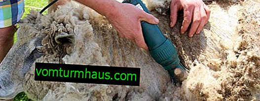 Shearing machine for sheep: types, models, how to do it yourself, operating rules