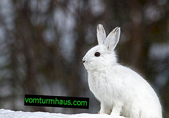 How to feed rabbits in the winter at home