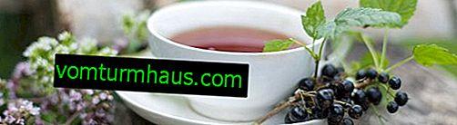 Vinbärsblad: medicinsk te, hur man gör