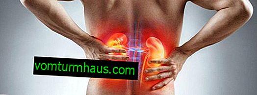 Funktioner ved brug af tranebær til behandling af nyre- og blære-sygdomme