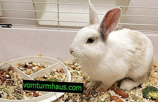 Kakve vitamine davati zečevima