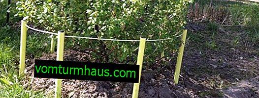 Bush vinbär hållare: tillverkningsmetoder