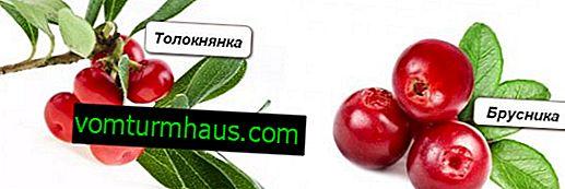 Kakšna je razlika med mednicami in jagodami