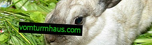 Cómo determinar la caza de un conejo