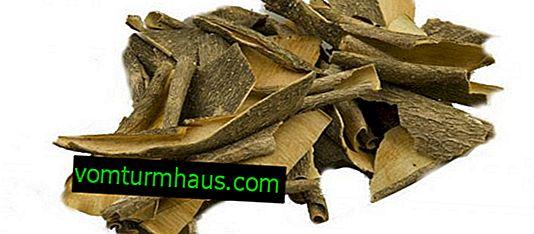 Corteccia di viburno: proprietà medicinali e controindicazioni