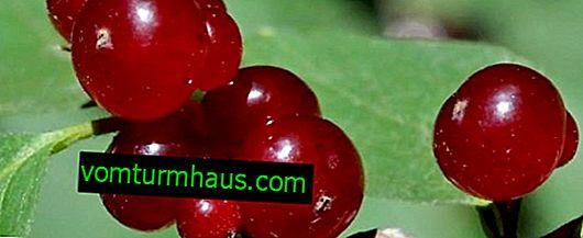 Kaprifolskog: huvudsakliga egenskaper, toxicitet, egenskaper