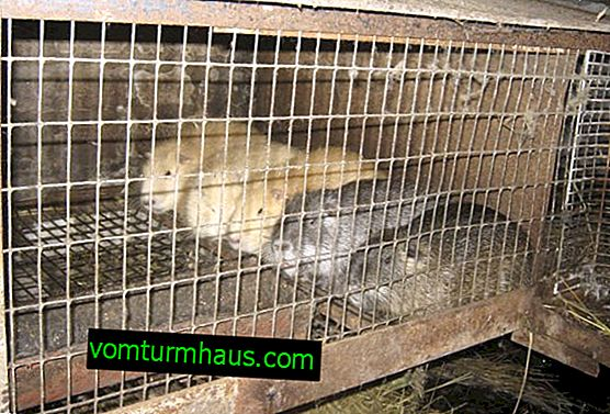 Cages for nutria: how to make at home, description and drawings