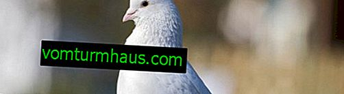 Recommended medicines for the treatment and prevention of pigeon diseases