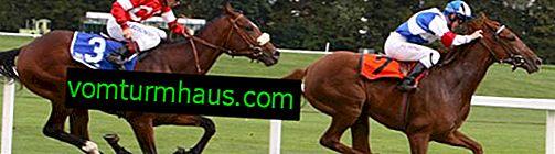 Anglický plnokrevník plemene koní: vlastnosti, údržba a péče