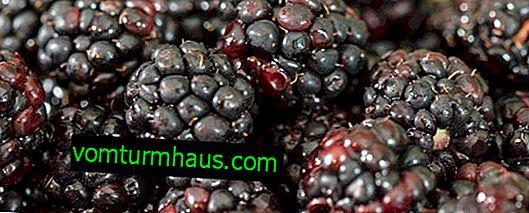 Popularne odmiany Blackberry - kluczowe cechy