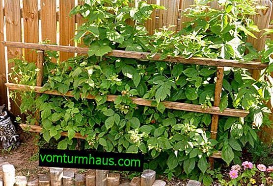 Podvezne metode za vrtnu kupinu: opis