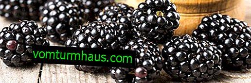 Najlepšie spôsoby reprodukcie odrody černice