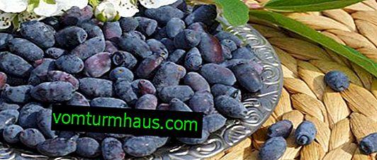 Zimolez jedlé sladké společenství - základní vlastnosti