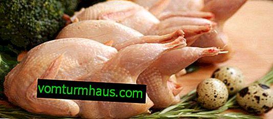 Mięso przepiórcze: korzyści i szkody