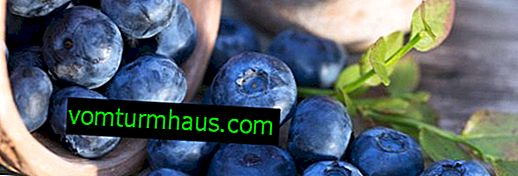 Useful properties of blueberries for pregnant women
