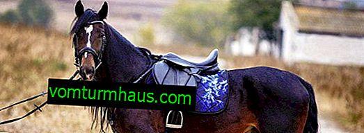 Пітник для коня