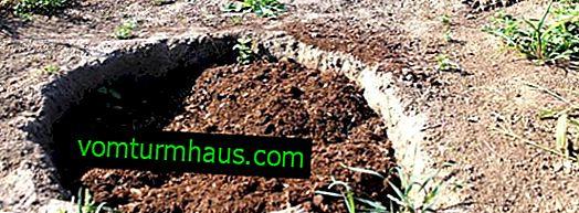 Jordkomposition för trädgårdsblåbär