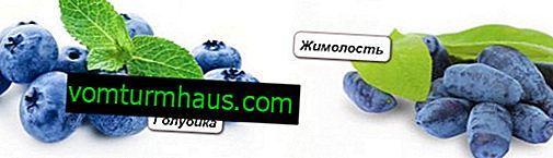 Blåbær og kaprifolie - de største forskelle