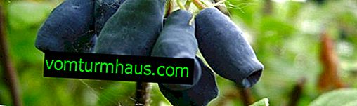 Kaprifolies spiselige og dekorative: sorter og deres funktioner