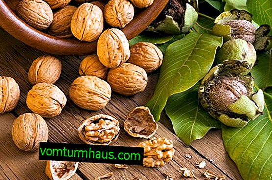 The benefits and harms of walnuts, the use of traditional medicine