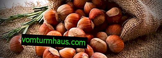 Comparison of hazelnuts and hazelnuts