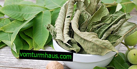 Výhody listů ořechů pro cukrovku