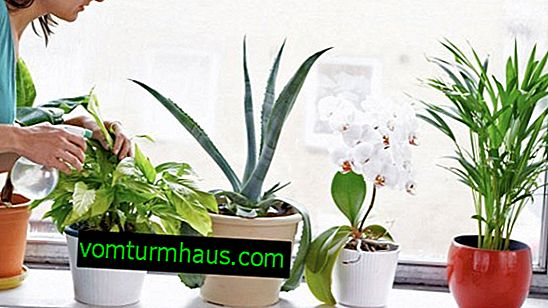 How and how to feed indoor plants at home