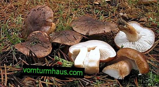 Description and application features of the fungus