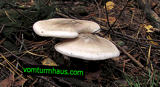 Description and application features of the mushroom