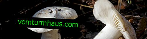 Opis i funkcje aplikacji grzyba