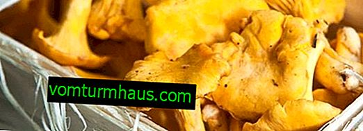 Chanterelle mushroom: how much is stored in the refrigerator, in what form to store