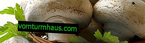 Rå champignoner: kontraindikationer, fordele og mulig skade på råforbruget
