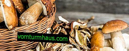 Opbevaring af porcini-svampe: metoder og vilkår