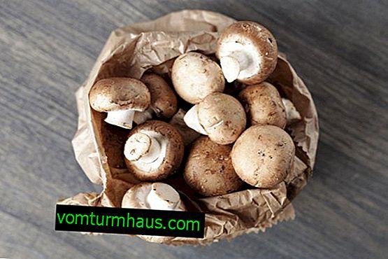 Stockage de champignon frais
