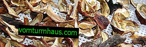 Sådan tørres porcini-svampe derhjemme