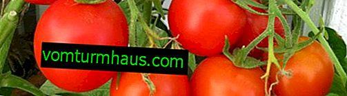 Zašto lišće požuti na rajčici: uzroci i preventivne mjere